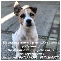 Пропала собака с.Кировское