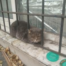Найден кот г. Днепр, ул. Высоковольтная 14