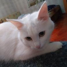 Пропала кошка 'Лысогорская '