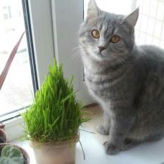 Пропала кошка, Киев Якуба Коласа