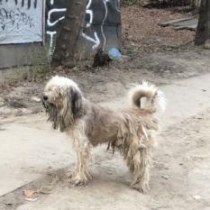 Помогите найти хозяина собаки!