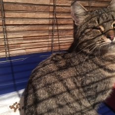 Найдена кошка - пр.Соборности 15