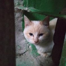 Найдена кошка (или кот)