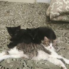 Отдам котят в хорошие руки,Измаил