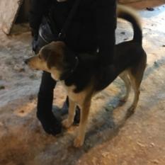 Найдена собака г.Киев Ленинрадская площадь
