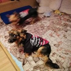 Пропала собака. черно-рыжий метис, сука. Киев. Вознаграждение 3 тыс
