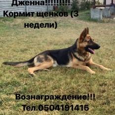 Пропала наша собака!!!