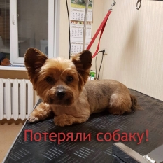 Все еще в поисках нашей собаки  Днепр
