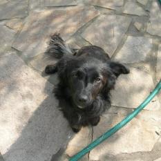 пропала собака село Днепрльстан