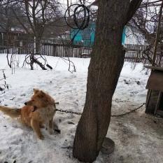 Нашли собаку Березань!