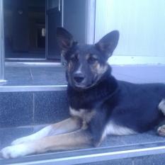 пропала собака, дворняжка, черная, кличка Ева
