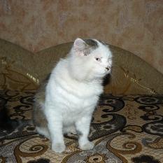 Потерялся кот Чернигов