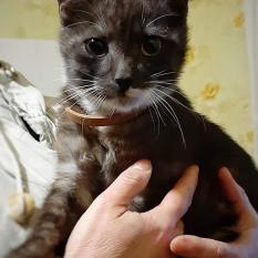 Отдам котенка в заботливые руки