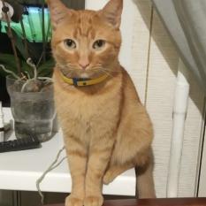 Пропал рыжий кот, Одесса