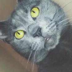 Пропал котик Одесса спуск Маринеско 8