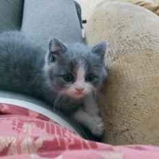 Пропал котенок 2,5 месяца (девочка). Хортицкий р-н