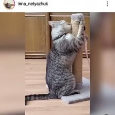 Пропал кот взрослый(окрас вискас)