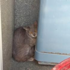Найдена кошка - Киев метро Дворец Украины