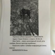 Пропала собака - Боярка - девочка Курцхар