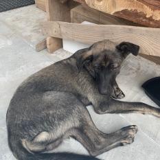 Найдена собака - Соломенский район