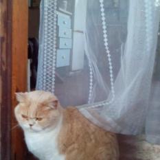 пропала кошка по Житомирской трассе, остановка Сосновый бор