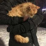 Найден рыжий кот Хмельницкий