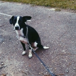 Загубився собака