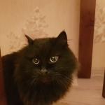 Нашёлся котик ЖК София