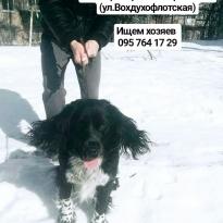 Найдена собака. Днепр