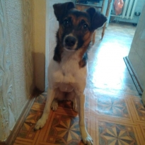 Найдена собака, м. Нивки