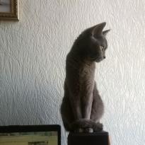 Пропала кошка Днепр