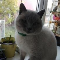 Загублено котика