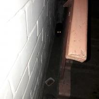 Найден кот/кошка черная