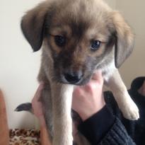 Ищу дом прекрасным щенкам!