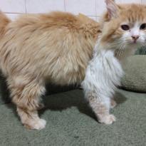 Найден кот. Бердянск