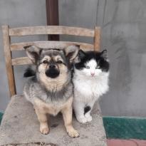 Украли собаку