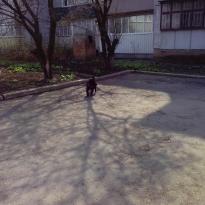 Найден щенок,окрас чёрный