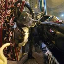 Пропала собака Жулька