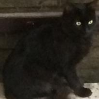 Пропал чёрный кот