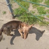 Найдена собака