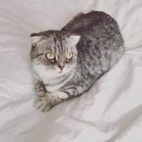 Пропала домашняя не ручная кошка Мася