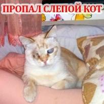 Пропал слепой кот