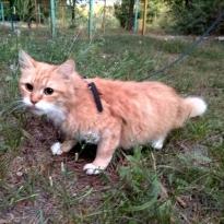 Потерялась рыжая кошка