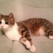 Кошечка Сима ищет новый дом