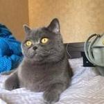 Пропал кот Яго