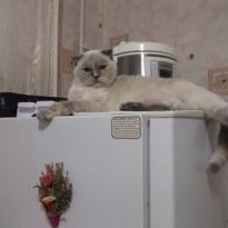 Колорная кошка