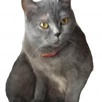 Помогите вернуть кошку за вознаграждение