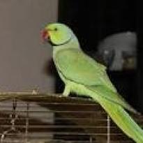 Улетел попугай