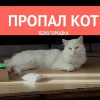 Пропал кот кличка Марсель