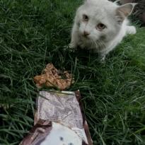 Найден белый кот